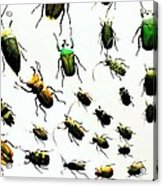 The Beetles Acrylic Print