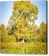 The Big Autumn Poplar Acrylic Print