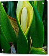 The Big Bloom Acrylic Print