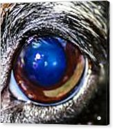 The Big Eye Acrylic Print