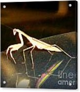 The Biggest Mantis I Ever Saw Acrylic Print
