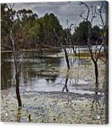 The Billabong V12 Acrylic Print