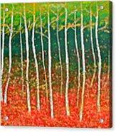 The Birches Acrylic Print