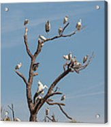 The Bird Tree Acrylic Print