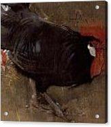 The Black Cock Acrylic Print