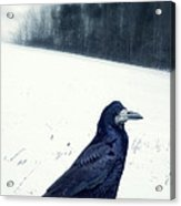 The Black Crow Knows Acrylic Print