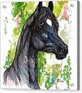 The Black Horse 1 Acrylic Print