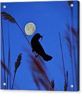 The Blackbird And The Moon Acrylic Print