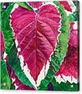 The Bleeding Heart Acrylic Print