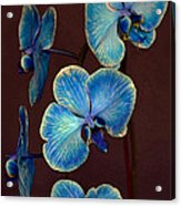 The Blue Orchid Acrylic Print