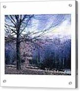 The Blue Trees Acrylic Print
