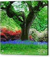 The Bluebell Wood Acrylic Print