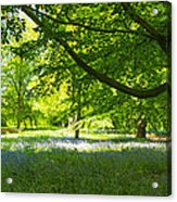 The Bluebell Wood Acrylic Print