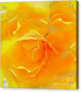 The Blushing Yellow Rose Abstract 2 Acrylic Print
