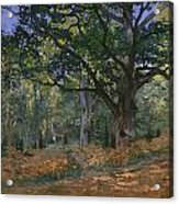The Bodmer Oak Acrylic Print