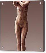 The Body Systems Female Acrylic Print