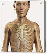The Bones Within The Body Pre-adolescent Acrylic Print
