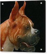 The Boxer... Acrylic Print
