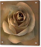 The Bronze Rose Flower Acrylic Print