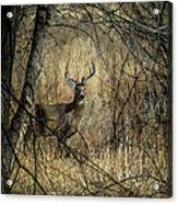 The Buck Acrylic Print
