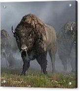 The Buffalo Vanguard Acrylic Print by Daniel Eskridge