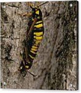 The Bug Acrylic Print
