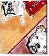 The Bulldogs Acrylic Print