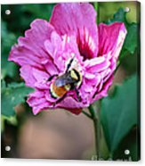 the Bumble Bee Acrylic Print