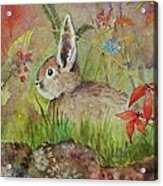 Mumu's Bunny Acrylic Print