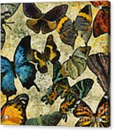 The Butterfly Collection #1 Acrylic Print