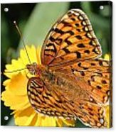 The Butterfly Effect Acrylic Print