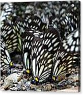 The Butterfly Gathering 2 Acrylic Print
