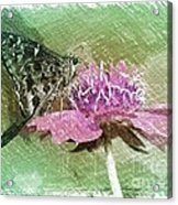 The Butterfly Visitor Acrylic Print