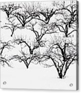 The Calligraphy Of Apple Trees In Winter Acrylic Print