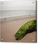 The Calm Acrylic Print by Michael Murphy