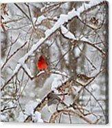 The Cardinal Rules Acrylic Print
