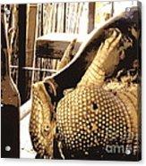 The Cask Of Armadillo Acrylic Print