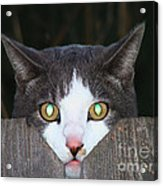 The Cat's Meow Acrylic Print by Wendy McKennon