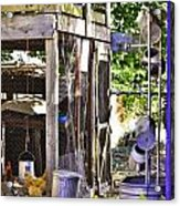 The Chicken Coop Acrylic Print