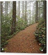 The Chosen Path Acrylic Print