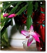 The Christmas Cactus Acrylic Print
