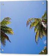 The Coconut Ladder Acrylic Print