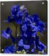 The Color Blue V6 Acrylic Print