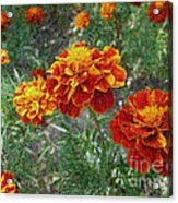 The Color Of Fire Acrylic Print