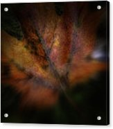 The Color Of Red Acrylic Print