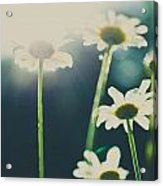 The Color Of Spring Acrylic Print
