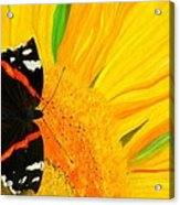 The Color Of Summer Acrylic Print