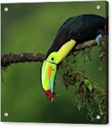 The Colors Of Costa Rica Acrylic Print