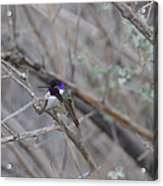 The Colors Of The Costas Acrylic Print
