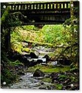 The Coming Of Autumn - Barnes Creek - Lake Crescent - Washington Acrylic Print